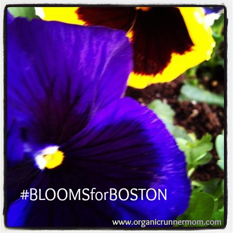 #BLOOMSforBOSTON–#runforboston, #bostonstrong, #boston2013, #bostonmarathon