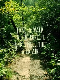 Take a walk in the forest and smell the wild air.