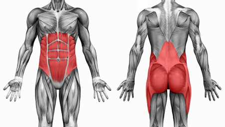 Apex Osteopathy: Core Muscles