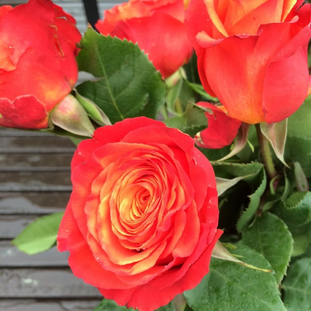 "The Bouqs. ""Dawn,"" sunrise orange roses."