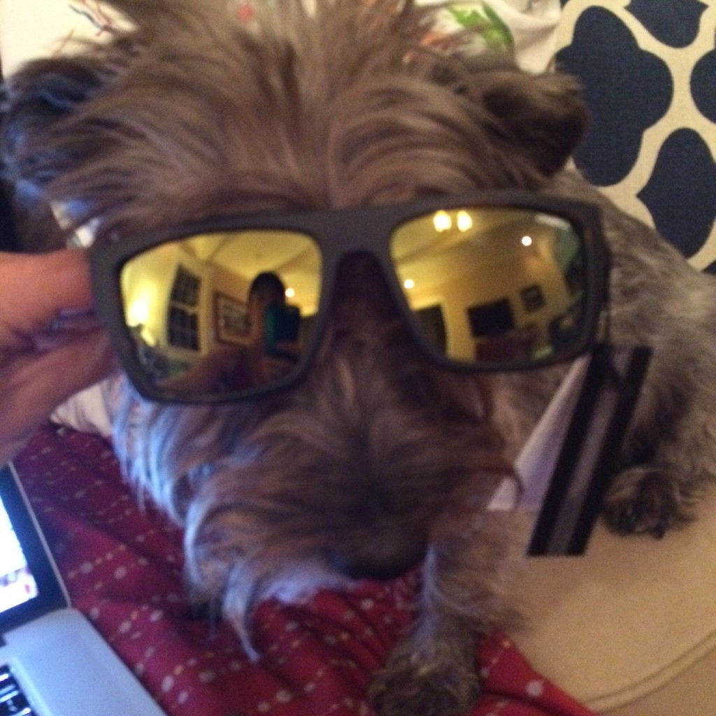 Now get out there and celebrate National Sunglasses Day with Lucy and don't forget to share your #sunglasseselfie on social media!  | Organic Runner Mom