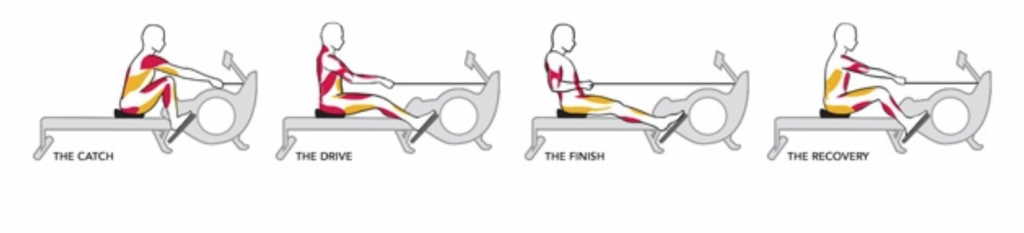 Illustration of Proper Rowing form from the Rowing Machine King